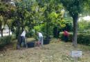 Avola: continuano i lavori di manutenzione del verde pubblico