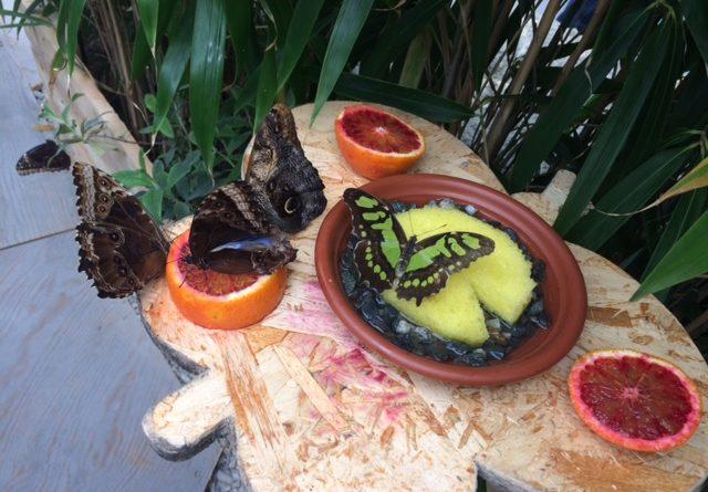 Siracusa: Taglio del nastro questa mattina per la casa delle farfalle