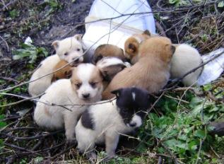 Cassibile Abbandonati 5 cuccioli di cane, intervengono i carabinieri