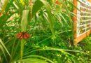 Siracusa: La casa delle farfalle prolunga fino al 15 luglio
