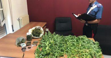 Noto: Avevano in casa 34 piante di cannabis. Coppia arrestata dai carabinieri