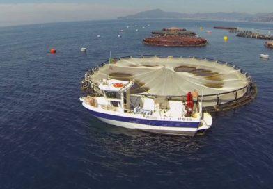 """Pachino – Incontro al Comune per scongiurare la chiusura dello stabilimento ittico """"Acqua Azzurra"""" e il licenziamento dei 96 dipendenti."""
