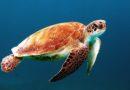 Siracusa si prepara ad accogliere le tartarughe marine